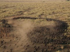 great-wildebeest-migration-from-the-hot-air-balloon