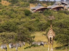 journey through Kenya and Tanzania