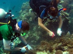 Marine Conservation Project in Thailand