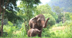 Elephant mother and baby in forest Thailand