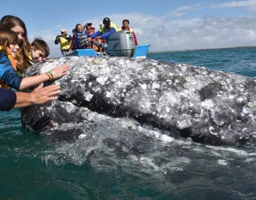 La Paz whales