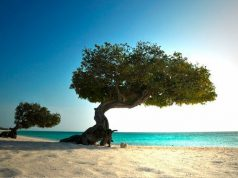 Dutch Caribbean island of Aruba