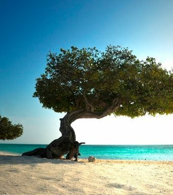 Dutch Caribbean island of Aruba