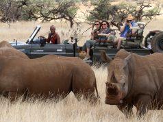 Lewa-Wilderness-Rhinos