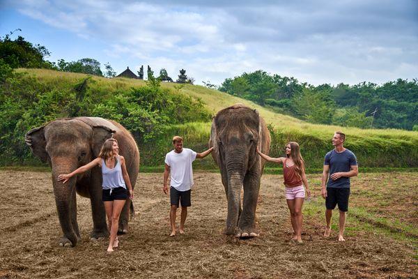 Hasil gambar untuk elephant mud fun