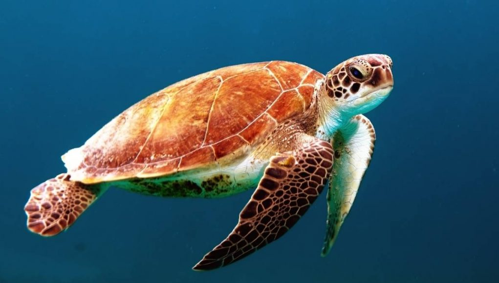 save the sea turtle