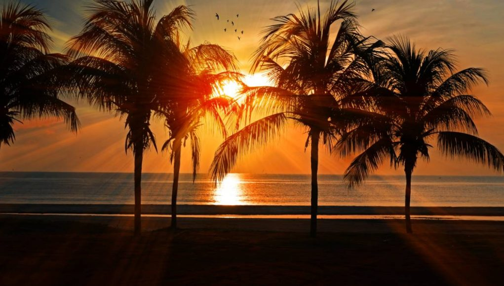 sun setting over the ocean with palm trees