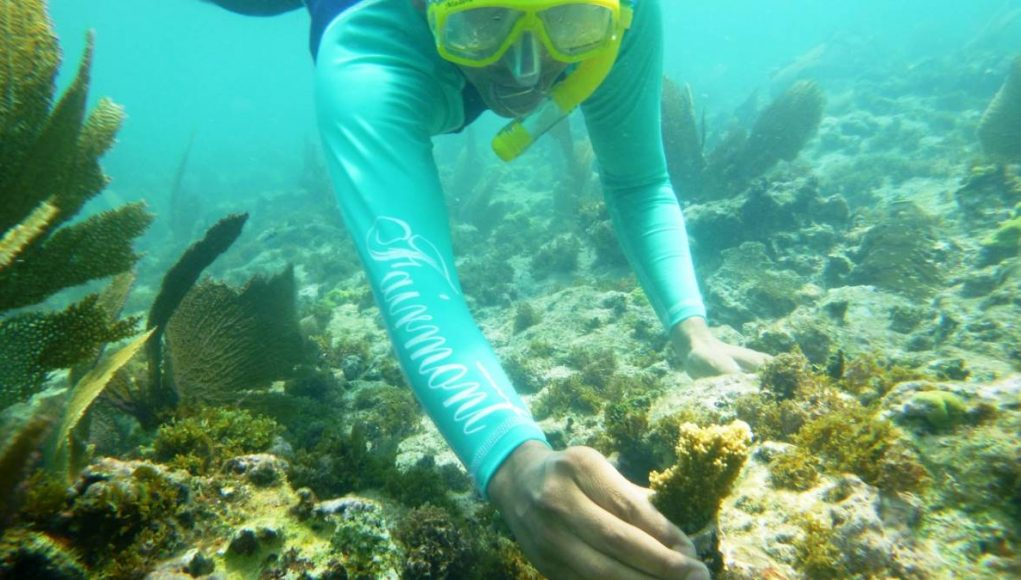 swimmer planting coral