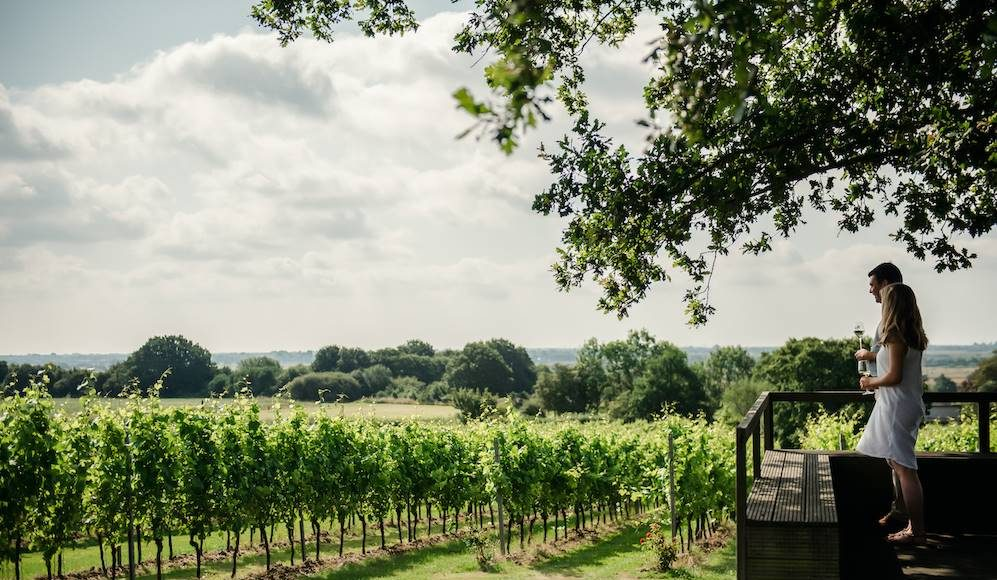day trip to a winery in the UK