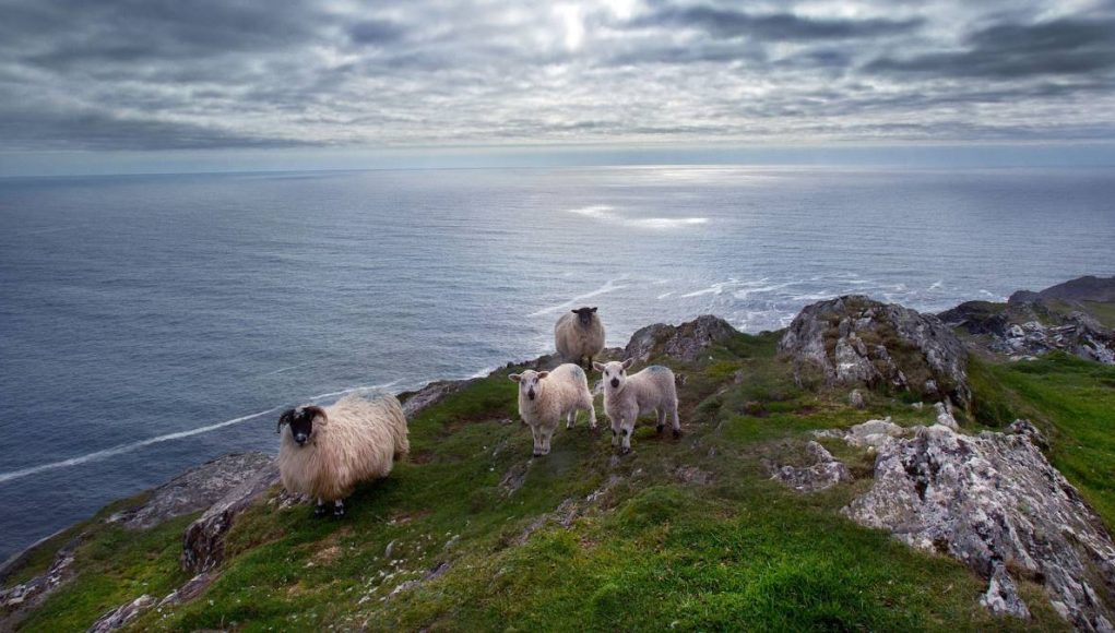 Southern Peninsulas, Sheeps Head