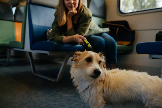 dog travelling on a train