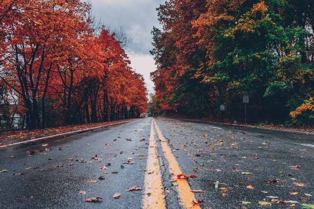 fall color along a tree-lined road